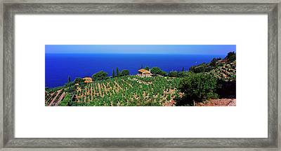 High Angle View Of Vineyard, Chiessi Framed Print by Panoramic Images