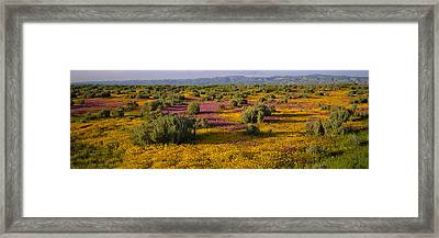 High Angle View Of Wildflowers In A Framed Print by Panoramic Images