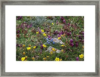 Framed Print featuring the photograph High Anxiety by Jeremy Rhoades