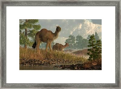 High Arctic Camel Framed Print by Daniel Eskridge