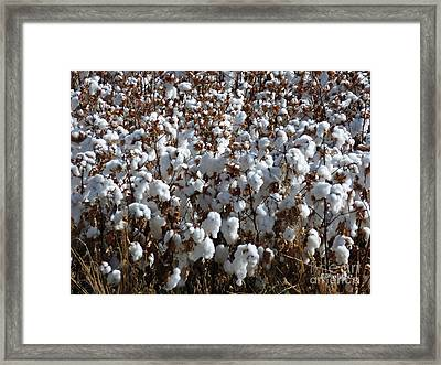 High Cotton Framed Print by Methune Hively