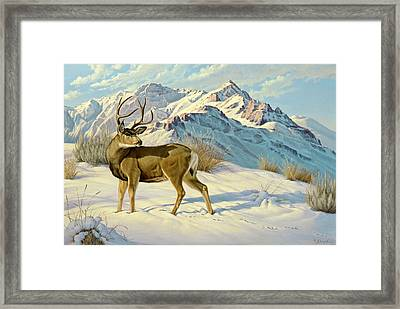 High Country Buck Framed Print by Paul Krapf