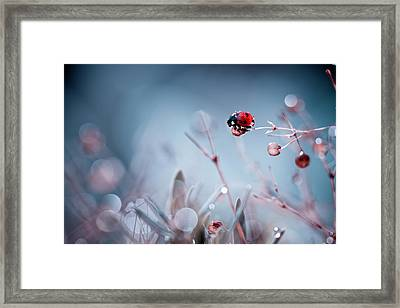 High Diving Framed Print by Fabien Bravin