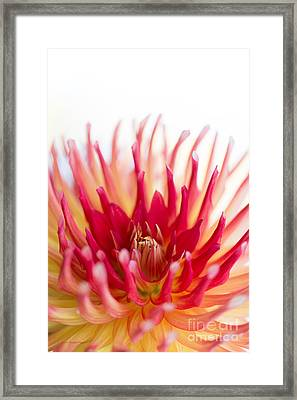 High Key Beauty Framed Print by Beve Brown-Clark Photography