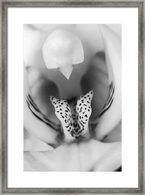 High Key Orchid Framed Print by Adam Romanowicz