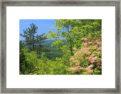 High Ledges Azelea Over Deerfield River Valley Framed Print