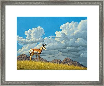 High Meadow - Pronghorn Framed Print by Paul Krapf