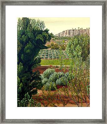 High Mountain Olive Trees  Framed Print by Angeles M Pomata