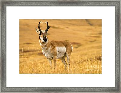 Wide Open Framed Print by Aaron Whittemore