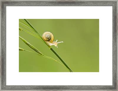 High Speed Snail Framed Print