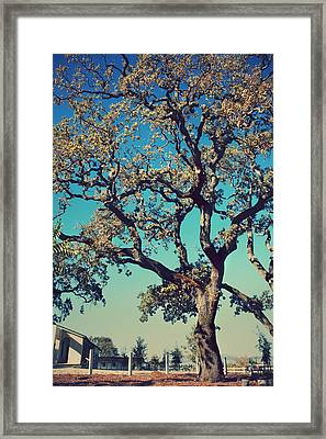 High Spirits Framed Print