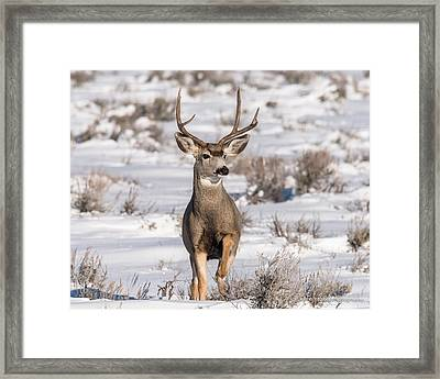 High Stepping At Dawn Framed Print by Yeates Photography