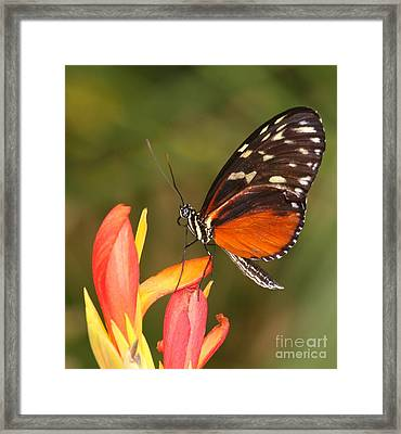 High Upon A Flower Framed Print by Ruth Jolly