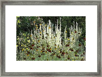 High Wattage Planting. Framed Print by James Rabiolo