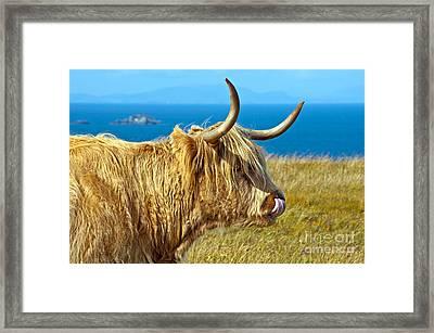 Highland Beauty Framed Print
