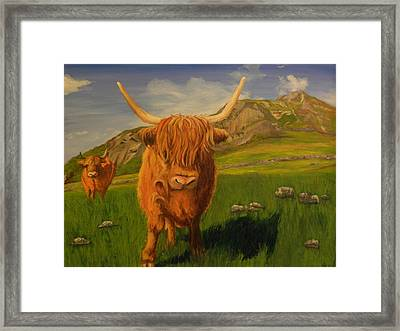Highland Coos Framed Print by Kelly Bossidy