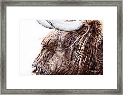 Highland Cow Color Framed Print