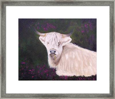 Highland Cow In The Heather Framed Print