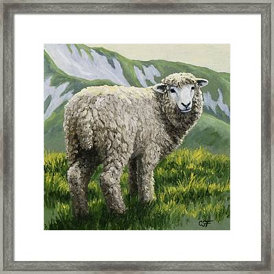 Highland Ewe Framed Print by Crista Forest
