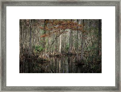 Highland Hammocks State Park Florida    Framed Print by Rich Franco