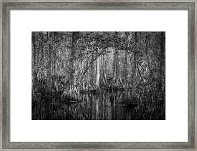 Highland Hammocks State Park Florida Bw Framed Print by Rich Franco