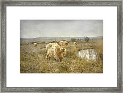 Framed Print featuring the photograph Highland Moo's by Roy  McPeak