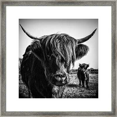 Highlander 1 Framed Print by Janet Burdon