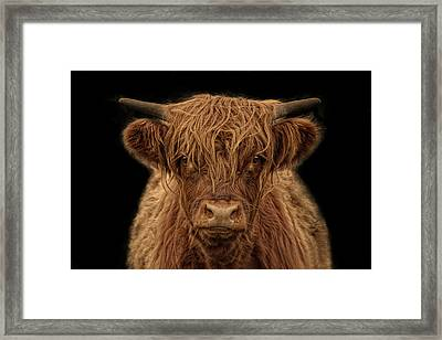 Highlander Framed Print