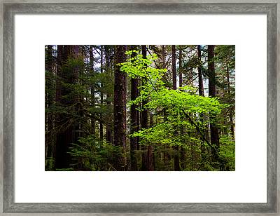 Highlight Framed Print by Chad Dutson