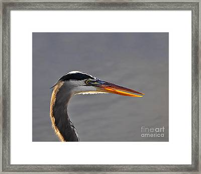 Highlighted Heron Framed Print