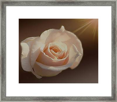 Highlighted Rose Framed Print