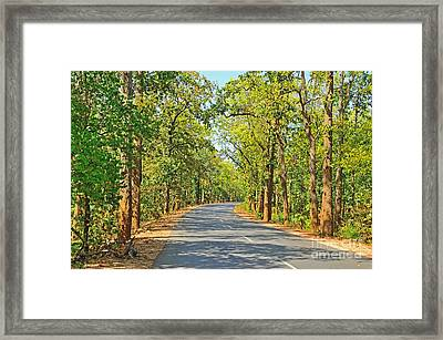 Highway In The Forest Framed Print