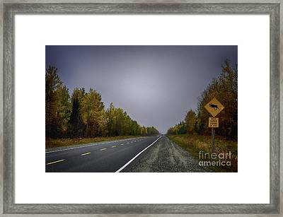 Highway Of Foliage Framed Print by Richard W Lamoureux