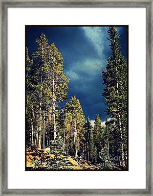 Hike In The Woods Framed Print