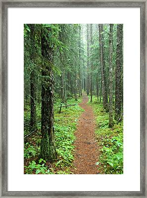 Hike To White River In Pukaskwa National Park Framed Print