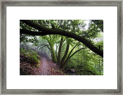 Hiking Huckleberry Framed Print by Hugh Stickney