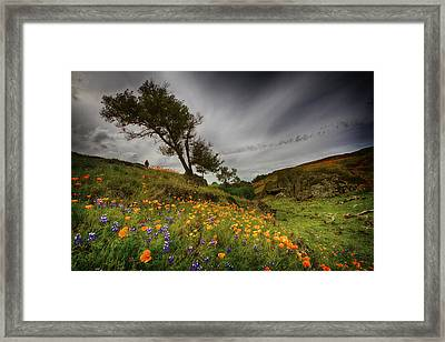 Hiking On Table Mountain Framed Print