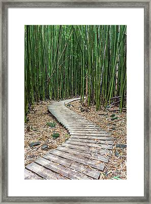 Hiking Through The Bamboo Forest Framed Print by Pierre Leclerc Photography
