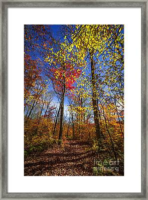Hiking Trail In Fall Forest Framed Print