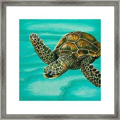 Hilahila Shy Sea Turtle Framed Print