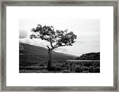 Hildene Tree 5689 Framed Print
