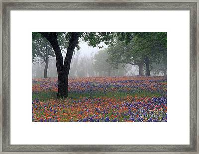 Hill Country - Fs000912 Framed Print