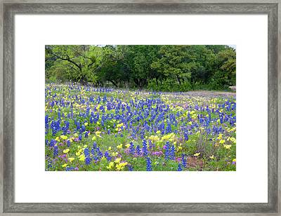 Hill Country, Texas, Bluebonnets Framed Print by Alice Garland