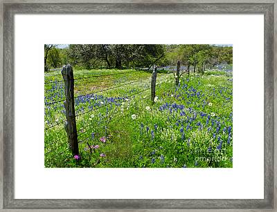 Hill Country Wildflowers Framed Print by Cathy Alba