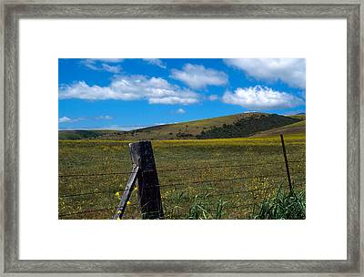 Hills Of Yellow Framed Print by Kathy Yates