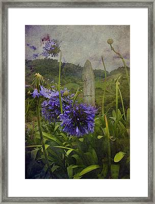 Hillside Flowers Framed Print by Kandy Hurley