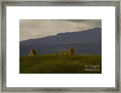 Framed Print featuring the photograph Hillside Lions by J L Woody Wooden