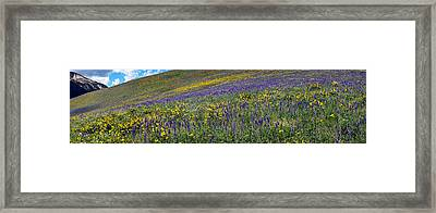 Hillside With Yellow Sunflowers Framed Print by Panoramic Images