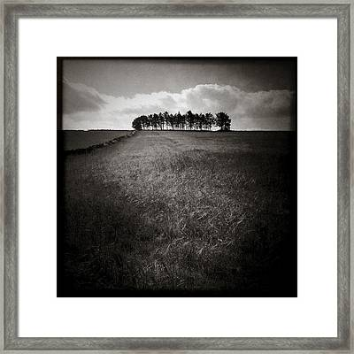Hilltop Copse Framed Print by Dave Bowman