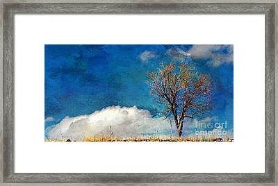 Hilltop Tree Framed Print by Barbara Chichester